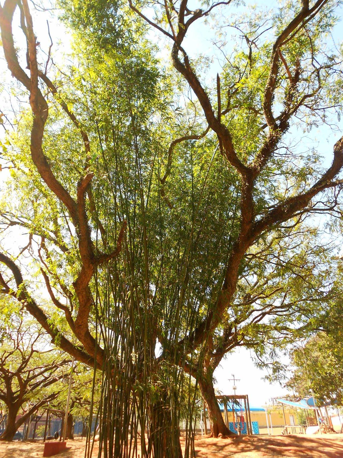 Pequeno bambuzal