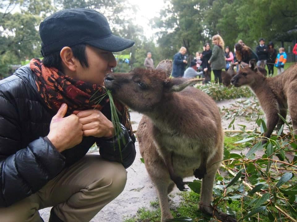 meeting kangaroos in melbourne