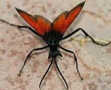 Serangga Kecil Berbahaya