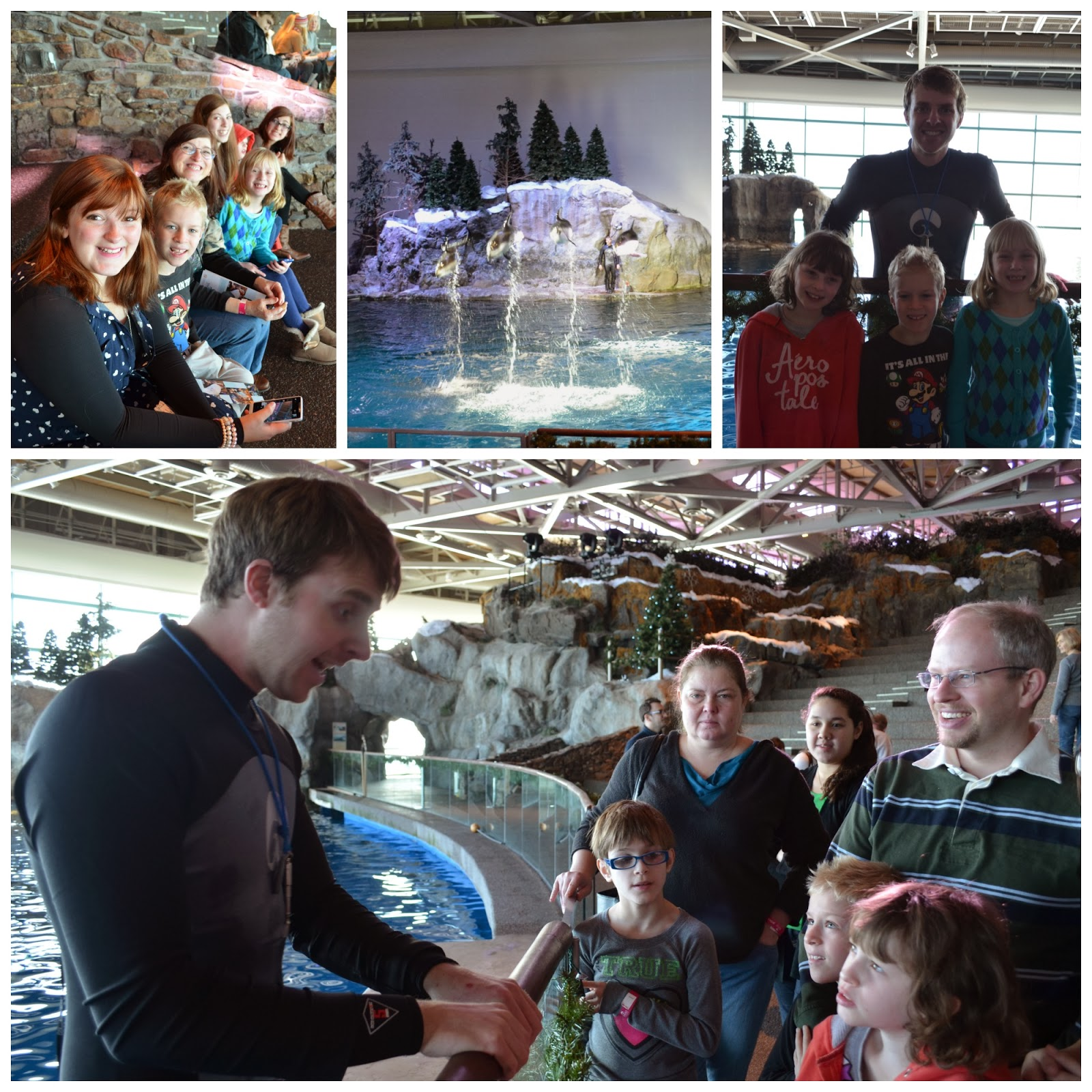 Visiting the Shedd Aquarium in Chicago
