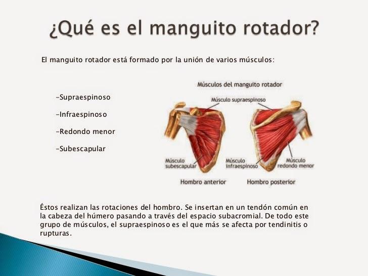 EL MANGUITO DEL HOMBRO | COLOTORDOC (DOC-TOR-LO-CO)