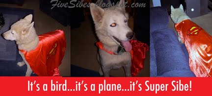 Wolf, the Super Sibe, joins other Super Heroes in Celebrating Pip's Blogiversary & Comment-a-Thon!