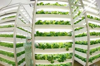 Tuyển 15 nữ làm nông nghiệp tại Nhật Bản