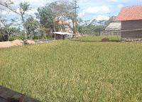 Hari Pertama KKN di Malang Selatan (Selasa, 3 Juli 12)