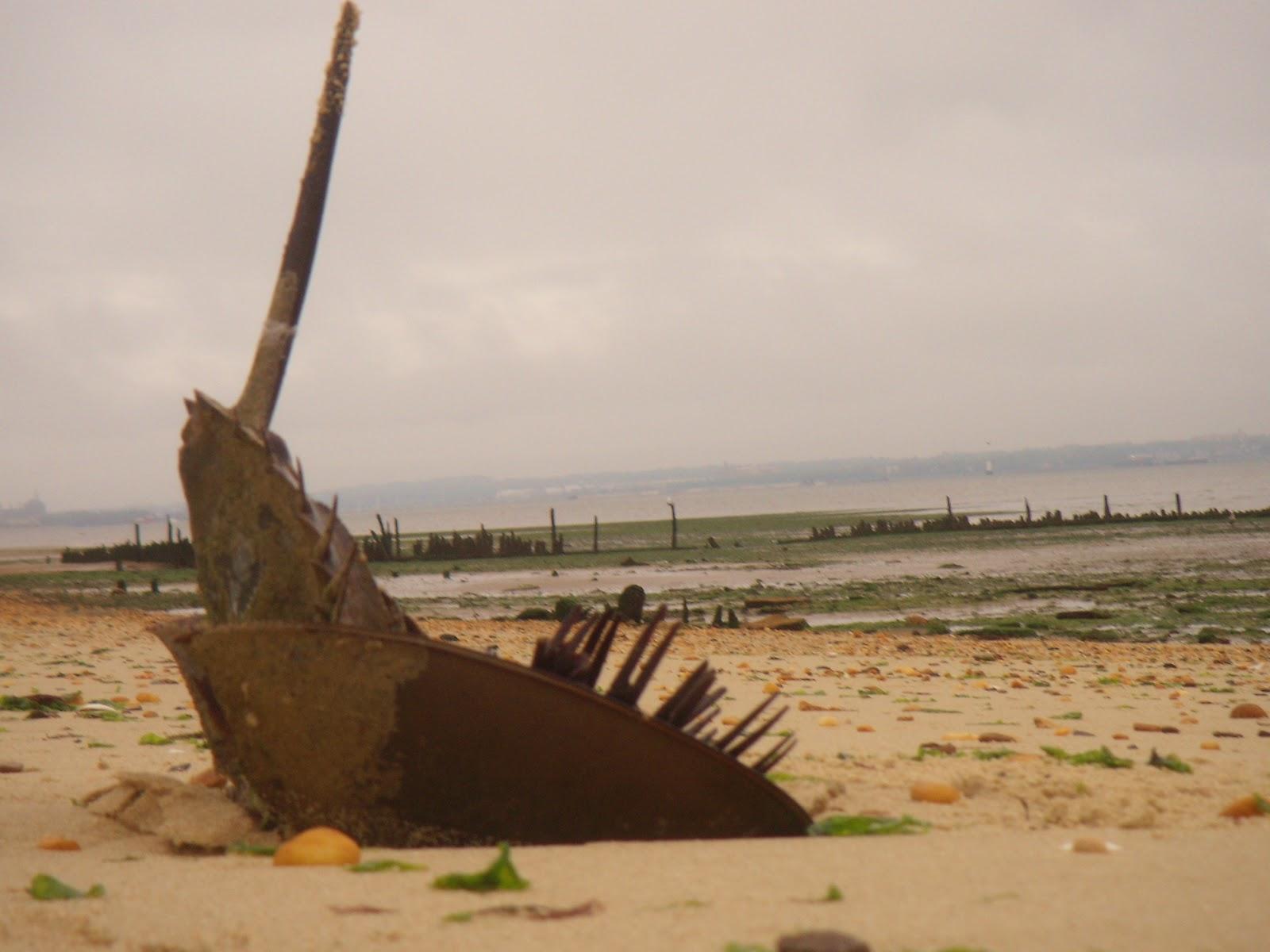 aberdeen nj life  horseshoe crab at low tide on cliffwood beach nj