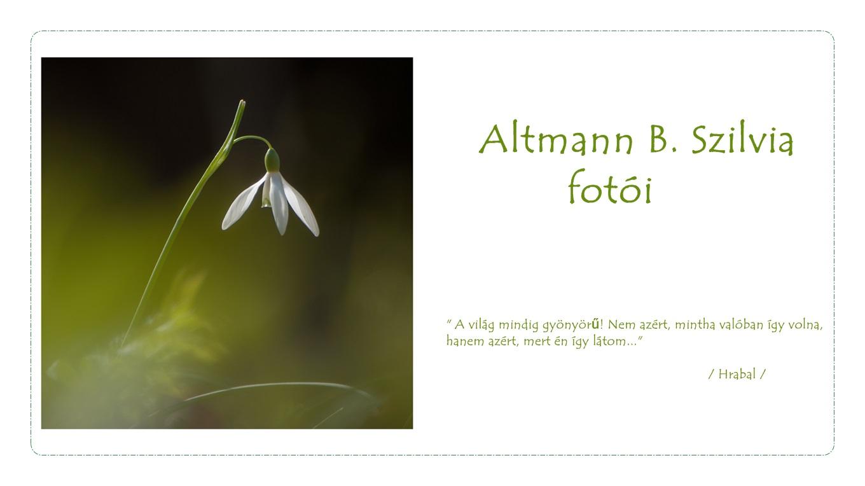 A világ, ahogyan én látom...   Altmann B. Szilvia fotói