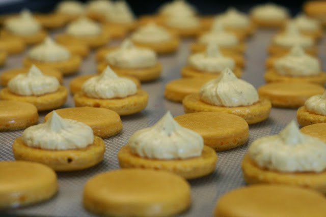 Rows of macaron shells with piped buttercream