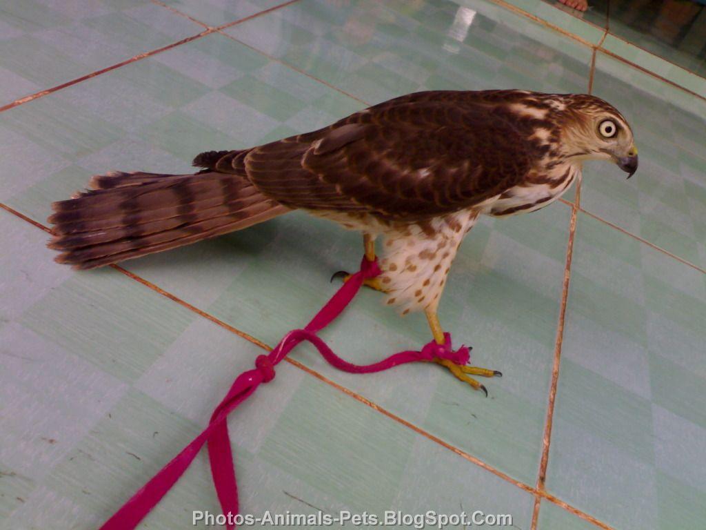 http://3.bp.blogspot.com/-J-hGh14PiPQ/TrWDUHBL1sI/AAAAAAAACM0/oVHiAL1jhyk/s1600/Pet%2Bbirds.jpg