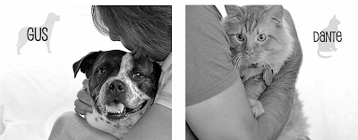 cat and dog photos from 2015 calendar supporting animal rescue