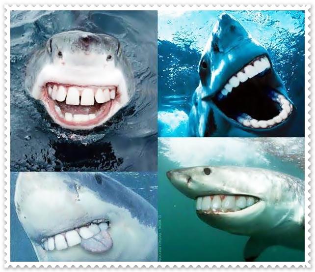 Seyum Itu Sedekah, Mulakan Hari Dengan Senyuman, Senyum Seindah Suria,