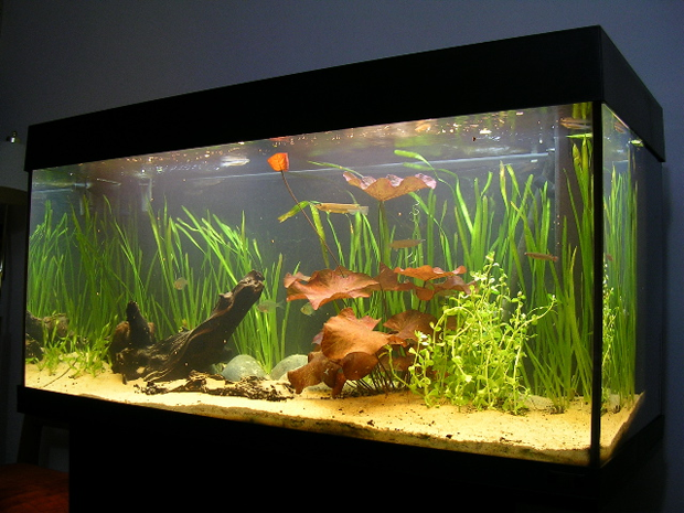 10 amazing aquariums for Freshwater fish tank setup