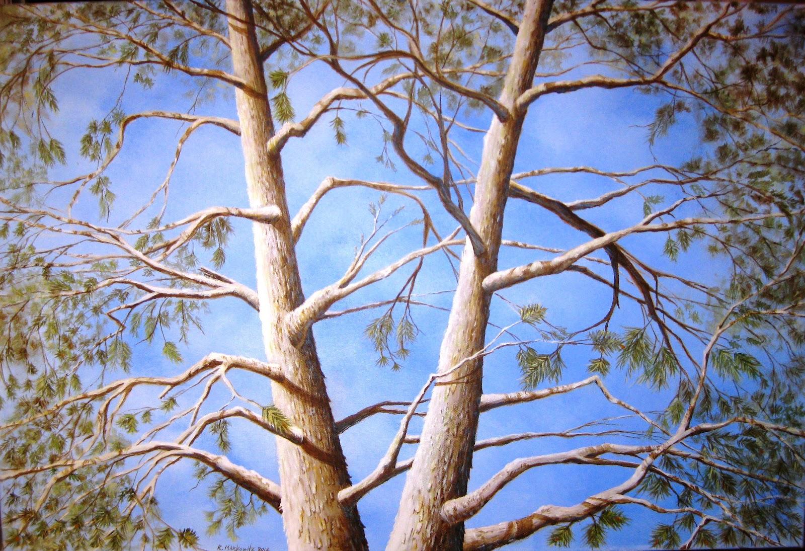 white fir design