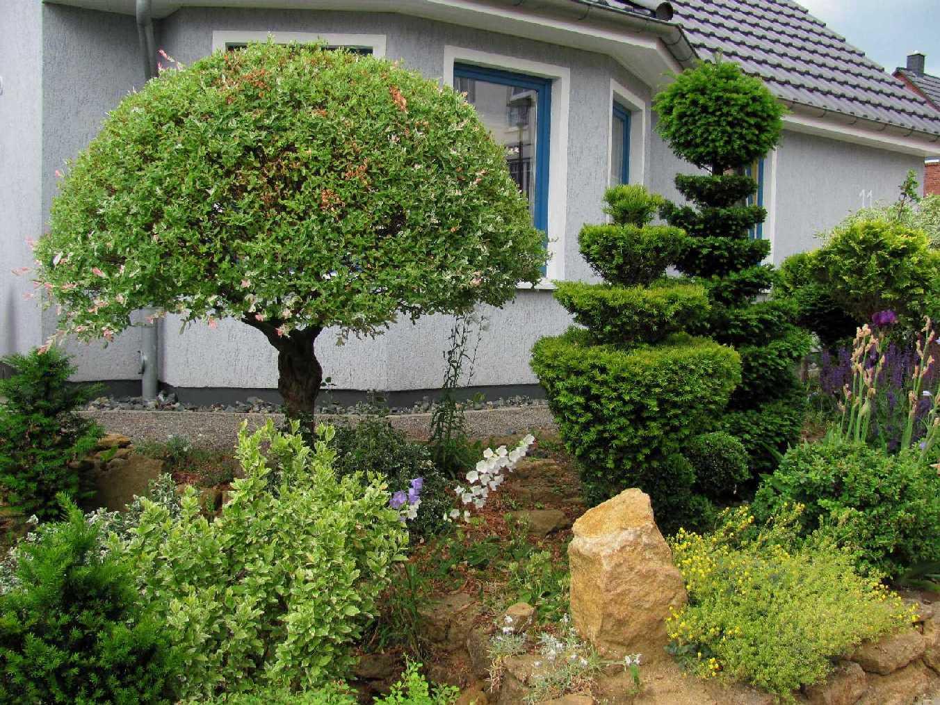 pin vorgarten mit buchsbaum on pinterest. Black Bedroom Furniture Sets. Home Design Ideas