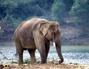 hewan langka sumatra