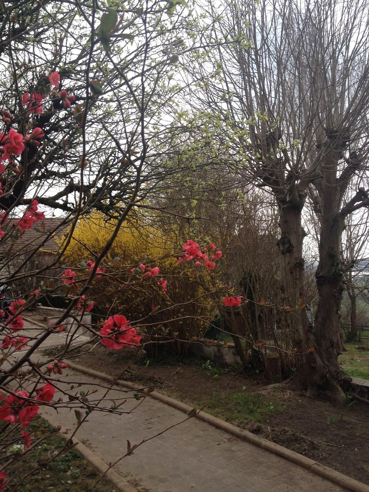 Derri re les murs de notre jardin mars 2014 for Derriere les murs de mon jardin