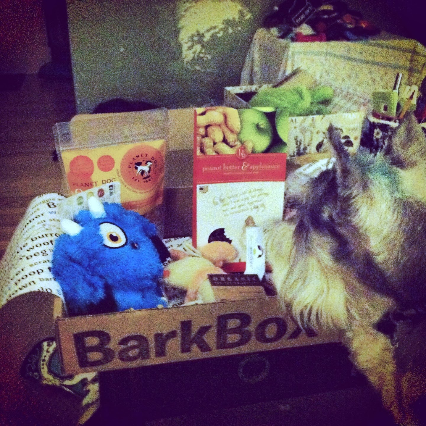 You know your pup wants a Barkbox!