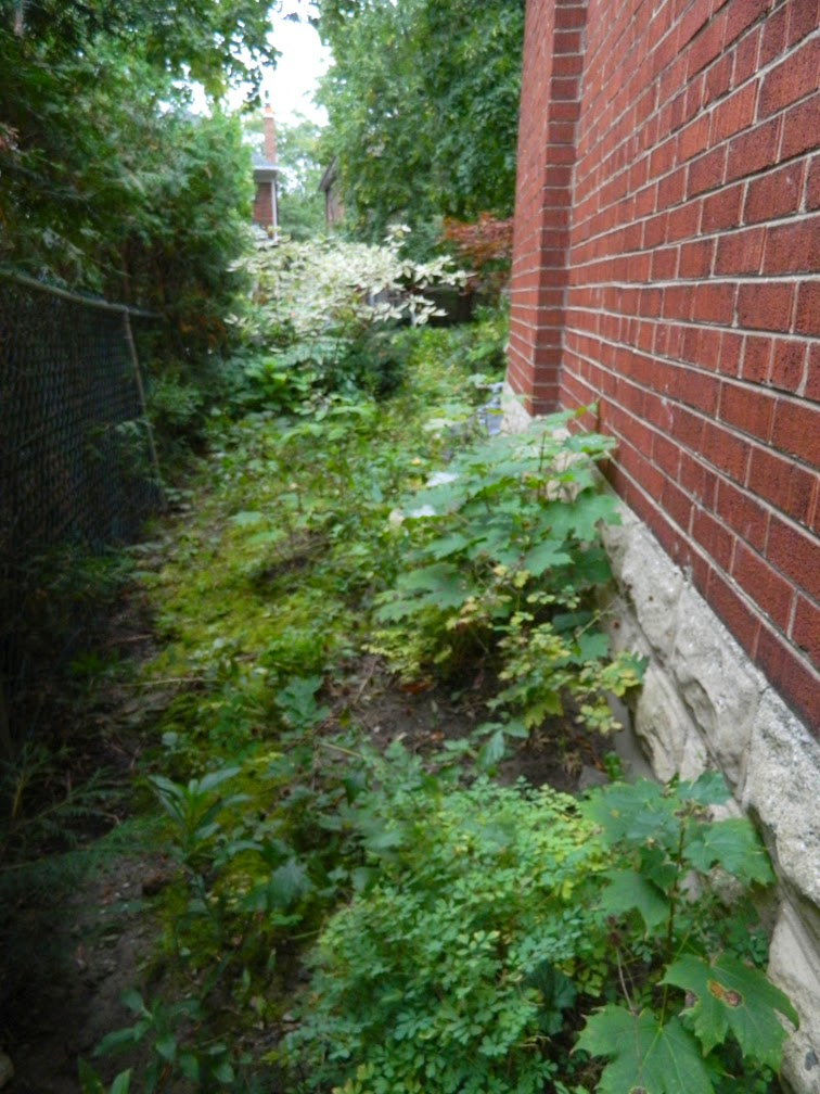 Toronto Mount Pleasant West garden clean up before Paul Jung Gardening Services