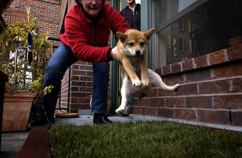 dog house training dog training With the dog house training