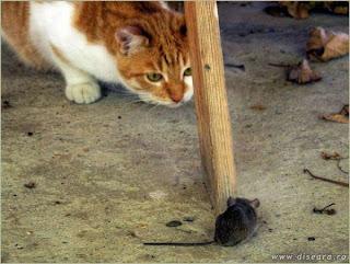 ma vede sau nu ma vede pisica :)
