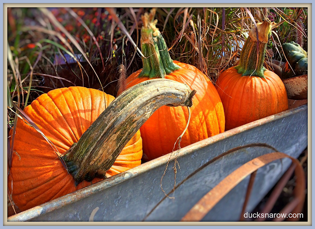 pumpkins, household tips, decorating