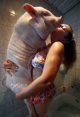 WTF. Cerdas en bañera. CUIDADO con los HUEVOS. HUMOR