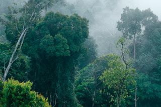 hutan-indonesia