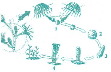 Tryout Online Ujian Nasional Biologi