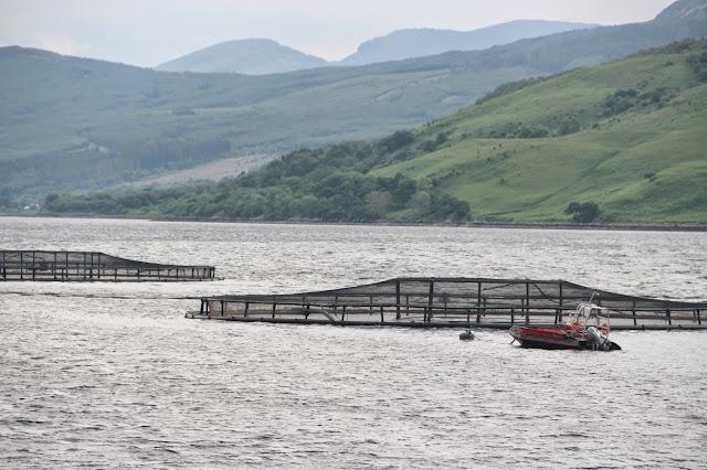 Salmon Fyne Loch Fyne