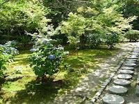 庭園にアジサイの花