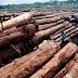 Penebangan Liar di Kawasan Hutan di Taman Nasional Lorentz dan Mimika Semakin Merajalela