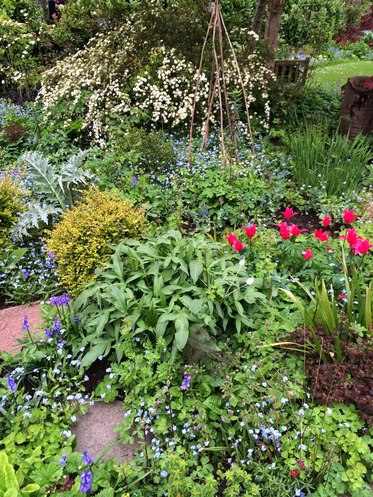 mixed border in early spring with tulips, bluebells and forgetmenots