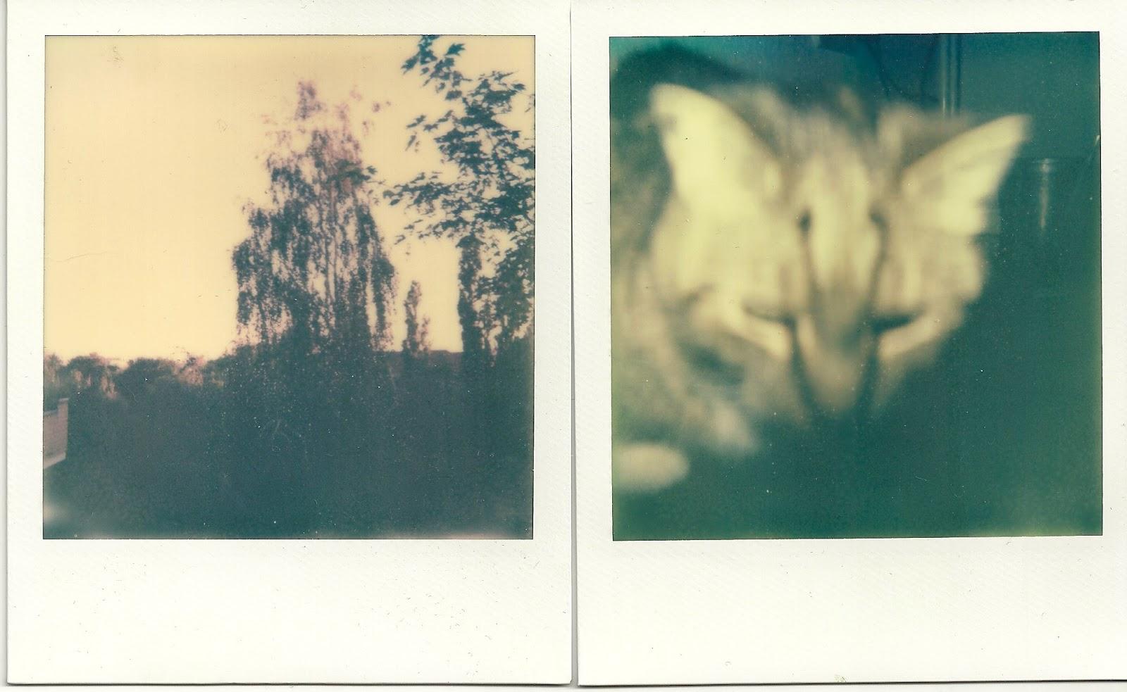 Polaroid. Pluralismus.: Februar 2013
