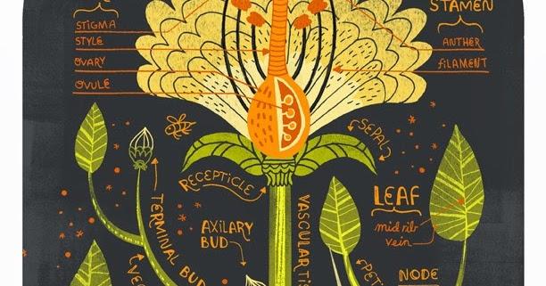 Moon to Moon: The Anatomy of a flower... Rachel Ignotofsky Design