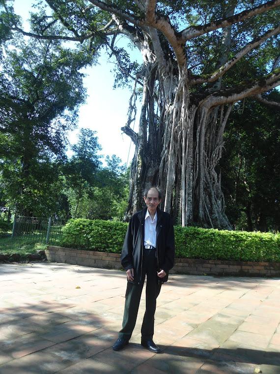 Cây Đa Thị 600 tuổi ở Lam Sơn