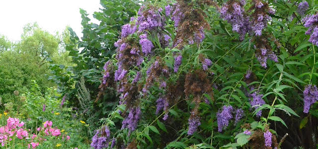 Iden Croft Herb Garden