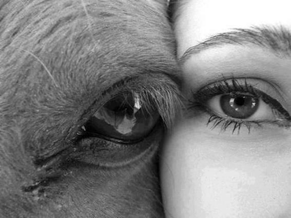 Página AÇÃO PELOS DIREITOS DOS ANIMAIS no Facebook