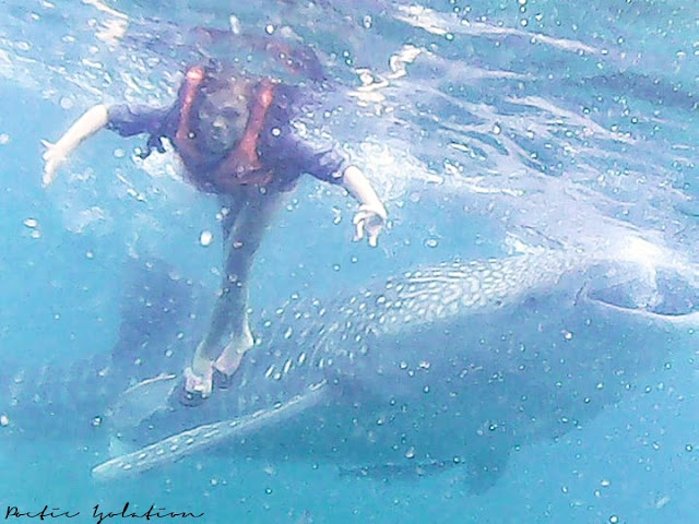 whale shark watching Oslob Cebu