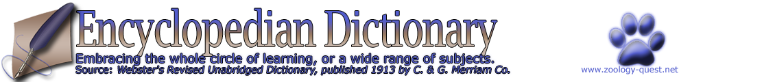 Encyclopedian Dictionary ( Araneus bicentenarius - Giant Lichen Orbweaver )