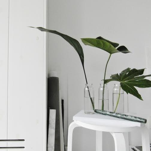 detalle verde, planta, hoja, dekoloop