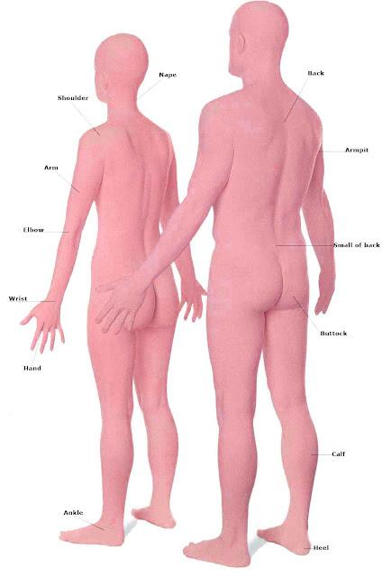 ingilizce vücudumuz ve bölümleri resimli ve görsel anlatım