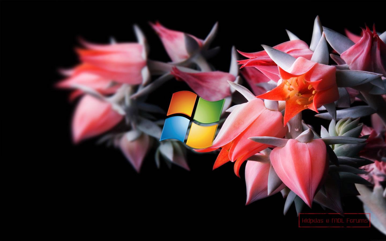 windows 8 latest hd beautiful wallpapers | best hd desktop wallpapers