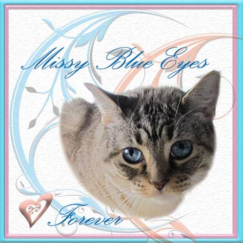RIP MISSY BLUE EYES