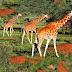 Wildlife Safari in Africa