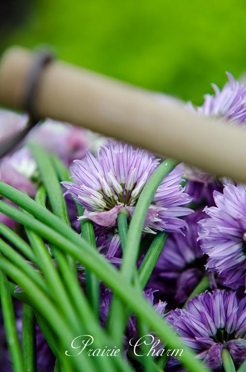 Summer herbs / Letné bylinky