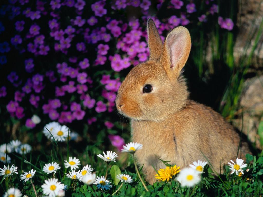 http://3.bp.blogspot.com/-J56YP6TeImY/Ta2g3cJtHRI/AAAAAAAAACI/3t3O9mpYZmA/s1600/Bunny-Wallpapers-bunny-rabbits-149131_1024_768.jpg