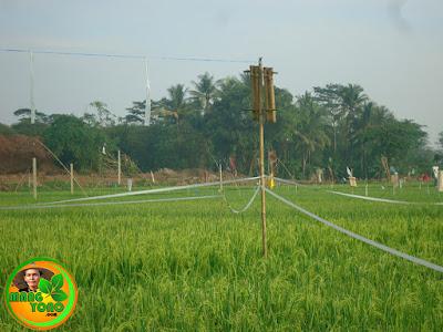Orang - orangan sawah, plastik, kaleng, bambu yang diberi tiang