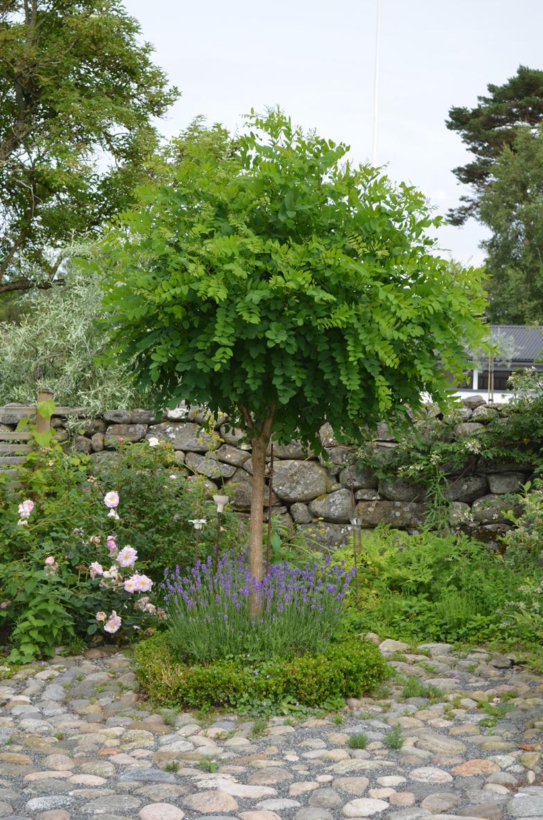 Top 28 Feature Plants For Front Garden 116 Best