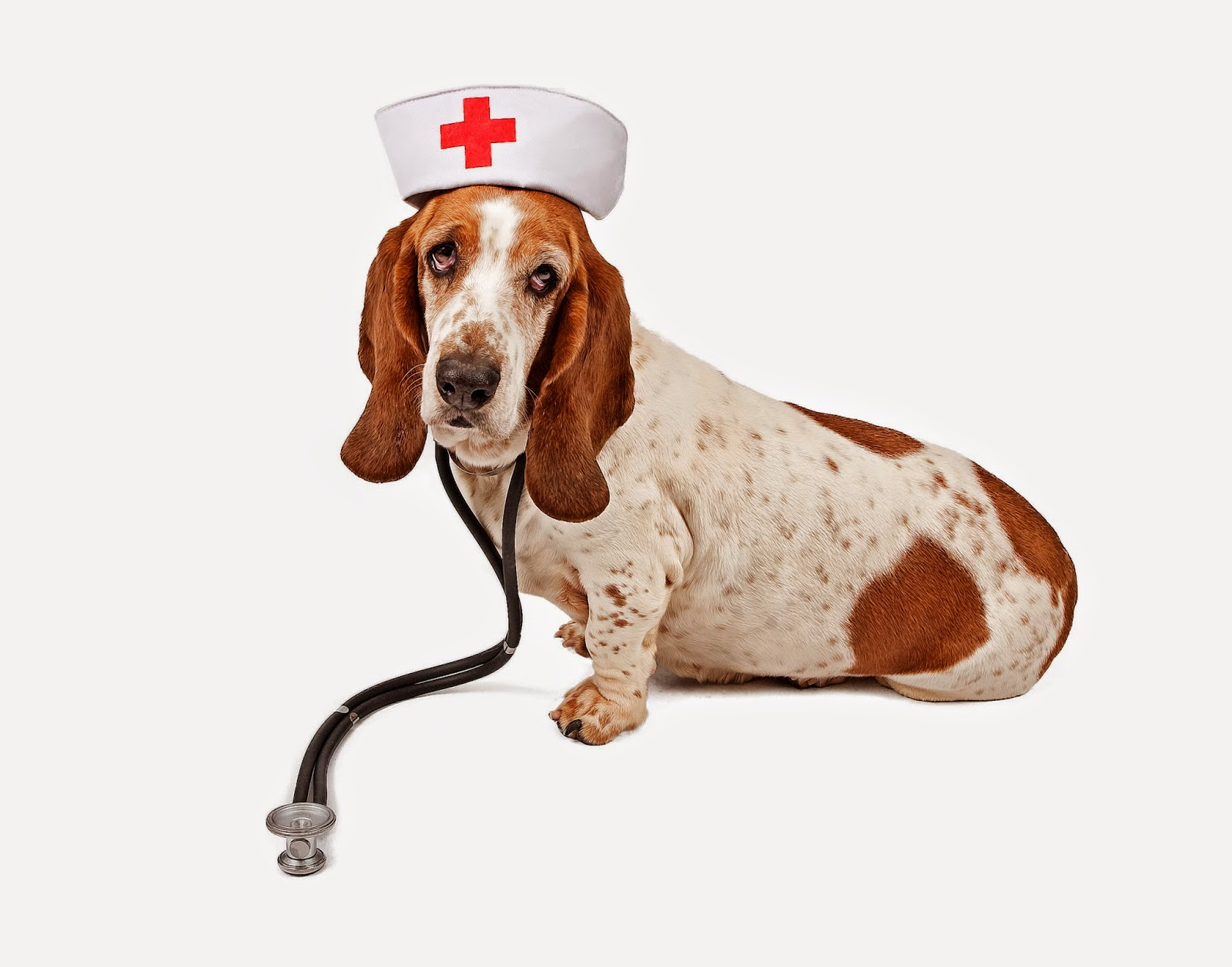 Vetek chics pet cpr and 1st aid classes 1betcityfo Choice Image