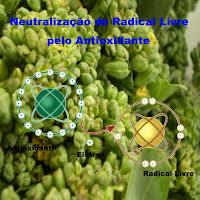 Neutralização do Radical Livre pelo Antioxidante.