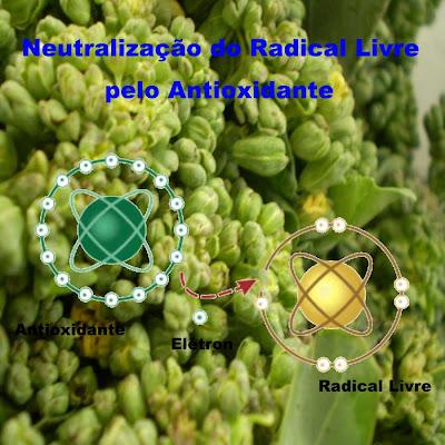 Neutralização dos Radicais Livres pelos alimentos antioxidantes, como o brócolis.